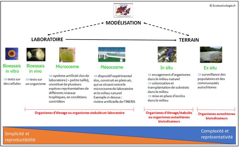 Notions de l'écotoxicologie - Les outils d'évaluation des effets des polluants : laboratoire, terrain et modélisation