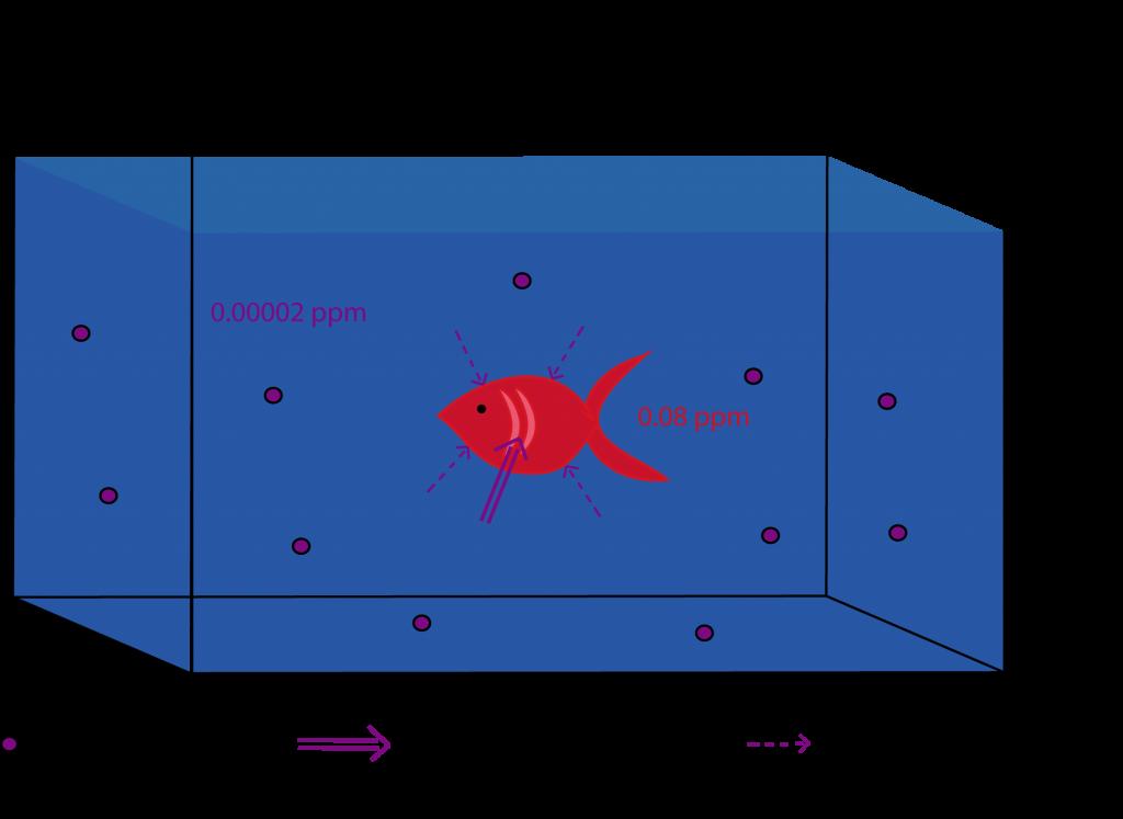 Notions de l'écotoxicologie - schéma sur la bioconcentration d'un polluant : diffusion cutanée ou respiration