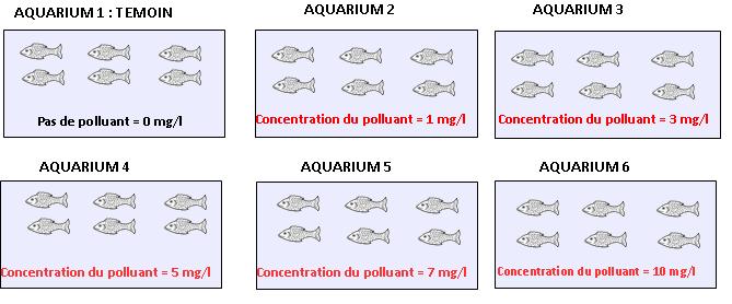 Expérience visant à évaluer les effets d'un polluant sur une espèce de poisson : différentes concentrations sont testées