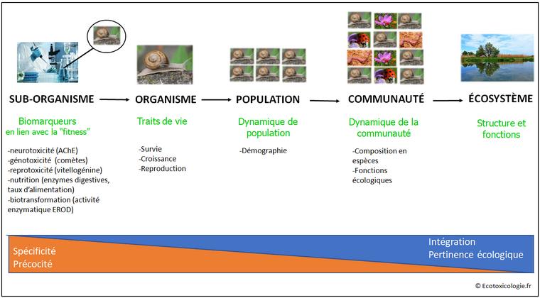 Niveaux d'observation des effets des polluants sur les organismes vivants