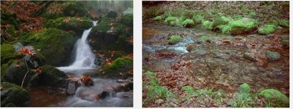 Cours d'eau des Vosges soumis à l'acidification