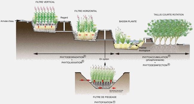 Dépolluer grâce aux plantes : phytoremédiation