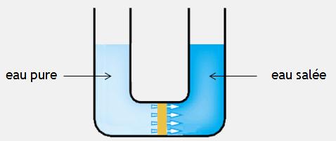 Schéma du phénomène de l'osmose