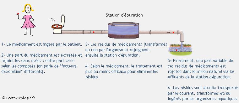 Schéma montrant le trajet de résidus de médicaments de l'ingestion jusqu'à la rivière