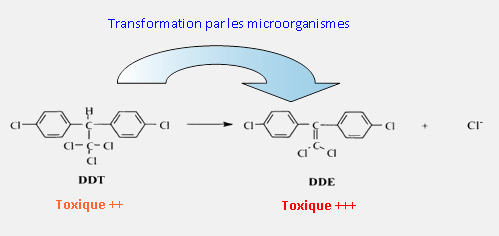 La transformation du DDT en DDE par les micro-organismes entraîne une augmentation de la toxicité