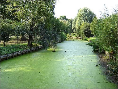 Cours d'eau eutrophisé