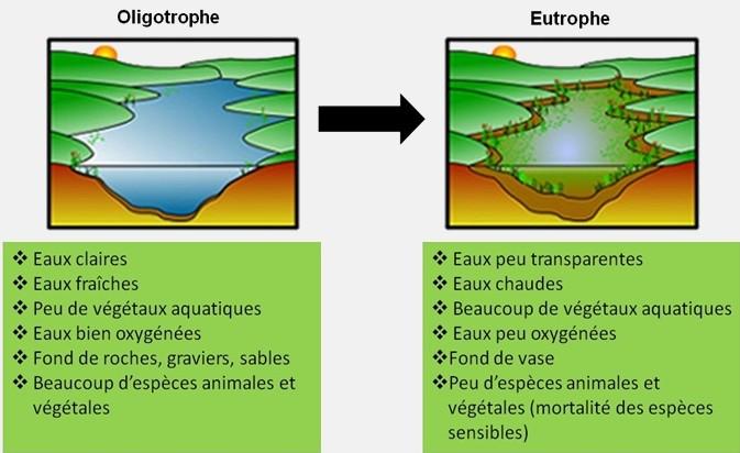 Processus d'eutrophisation : vers une asphyxie du milieu aquatique