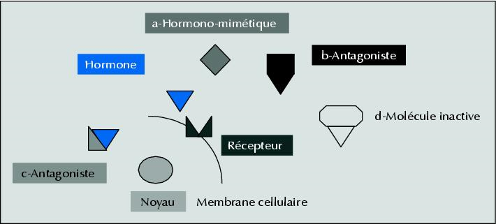 Le perturbateur endocrinien peut se fixer sur le récepteur à la place de l'hormone naturelle, il imite ainsi l'hormone et perturbe le fonction normal de l'organisme