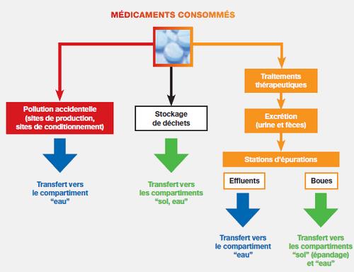 Différentes voies d'entrées des médicaments humains dans l'environnement
