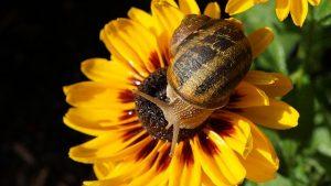 Biodiversité changement climatique
