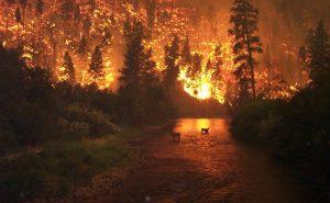 Evénèments météorologiques extrêmes : les incendies