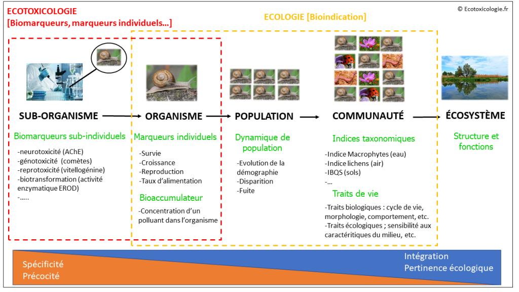 Évaluer les effets des polluants chimiques : la biosurveillance au carrefour de l'écotoxicologie et de l'écologie.