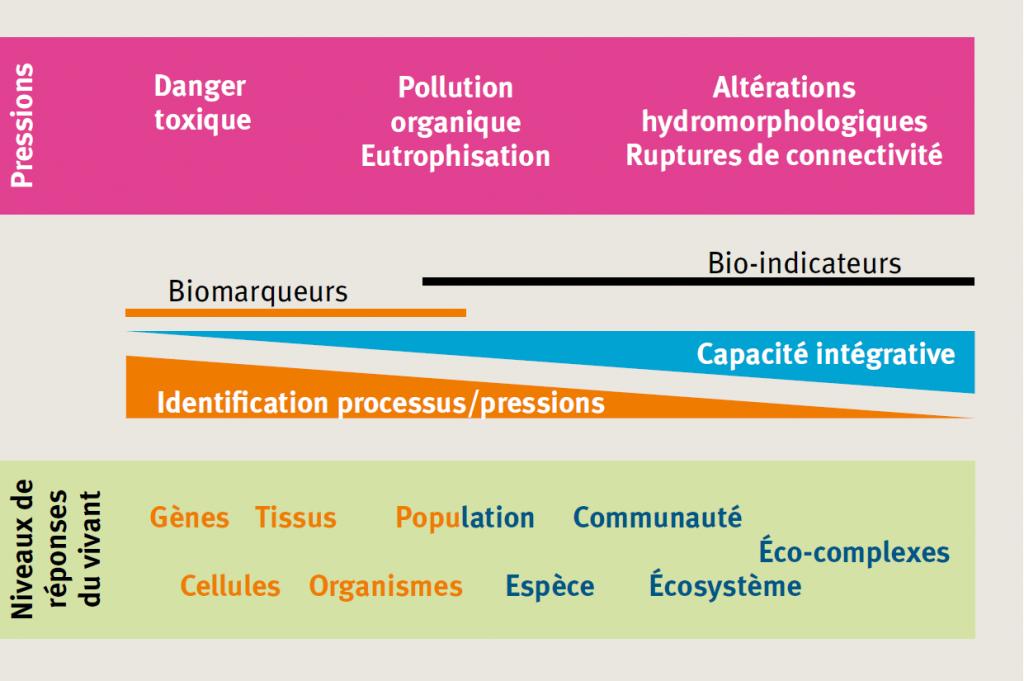 Biomarqueurs et bioindicateurs