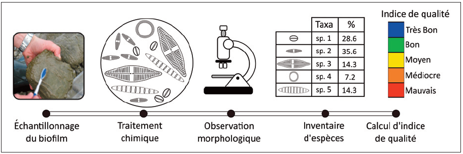 Bioindication : les diatomées