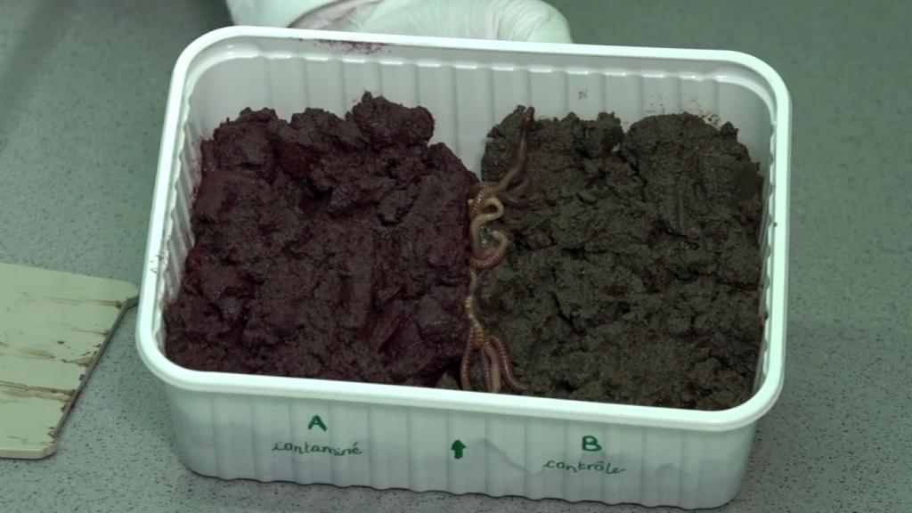 Bioessai d'écotoxicologie : essai d'évitement des vers de terre