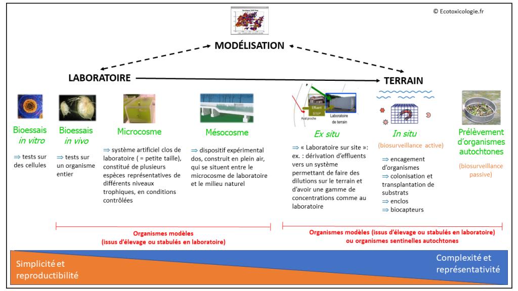 Ecotoxicologie : laboratoire, terrain et modélisation