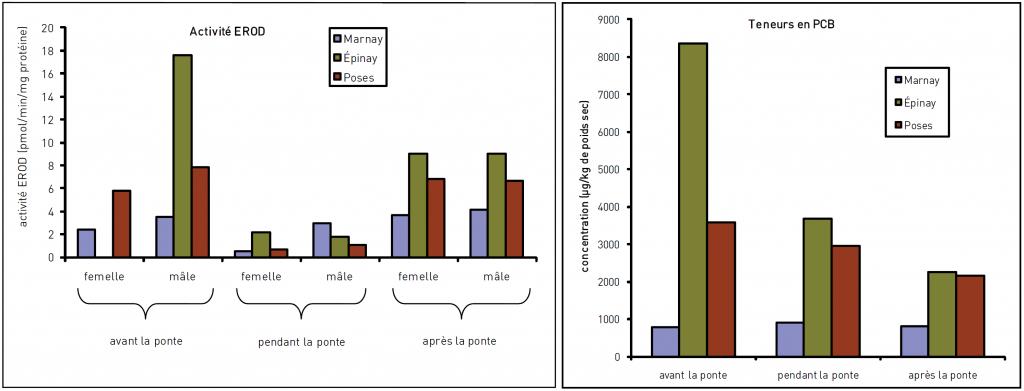 Evaluer les effets des polluants sur les êtres vivants à l'aide de biomarqueurs : l'activité EROD